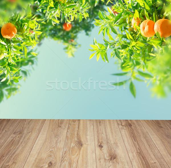 Narancsfa kert ágak kék ég fából készült deszkák Stock fotó © neirfy