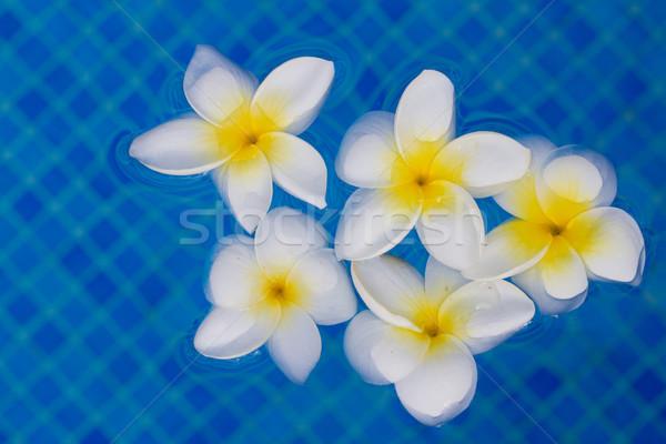Fiori blu piscina acqua Foto d'archivio © neirfy