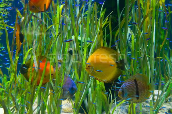 熱帯 水族館 緑 水 植物 ストックフォト © neirfy