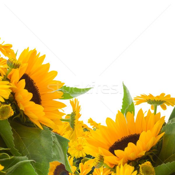 Photo stock: Tournesols · fleurs · isolé · blanche · soleil · nature