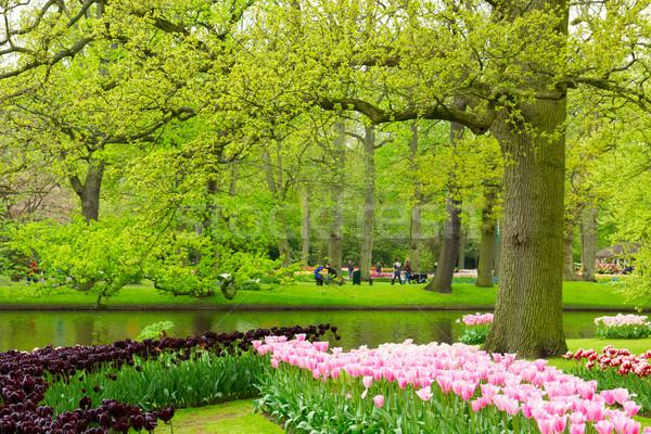 Primavera giardino Holland colorato prato nero Foto d'archivio © neirfy