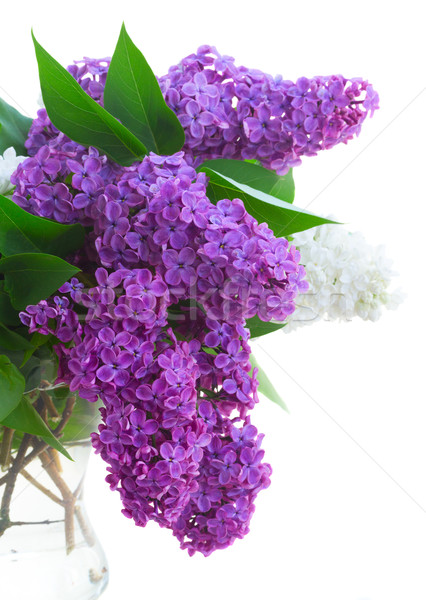 свежие сирень цветы ваза Сток-фото © neirfy