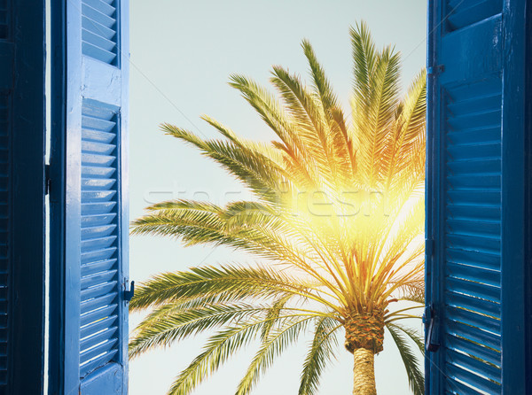 palm tree with sunshine Stock photo © neirfy