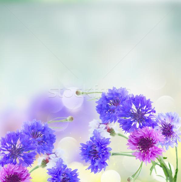 Niebieski różowy streszczenie kwiaty kukurydza piękna Zdjęcia stock © neirfy