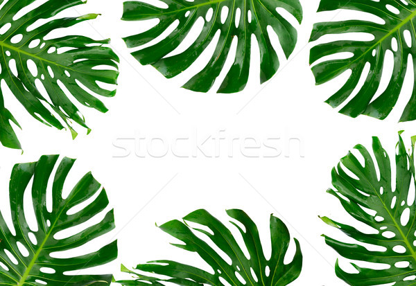 Tropical green leaves Stock photo © neirfy