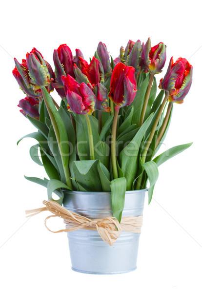 spring tulip flowers in pot Stock photo © neirfy