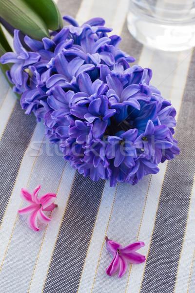 hyacinth flowers close up Stock photo © neirfy
