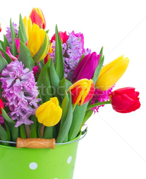 Tulipánok rózsaszín lila piros citromsárga közelkép Stock fotó © neirfy