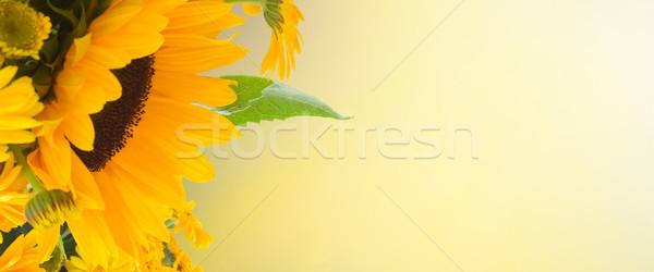 flowers garden Stock photo © neirfy