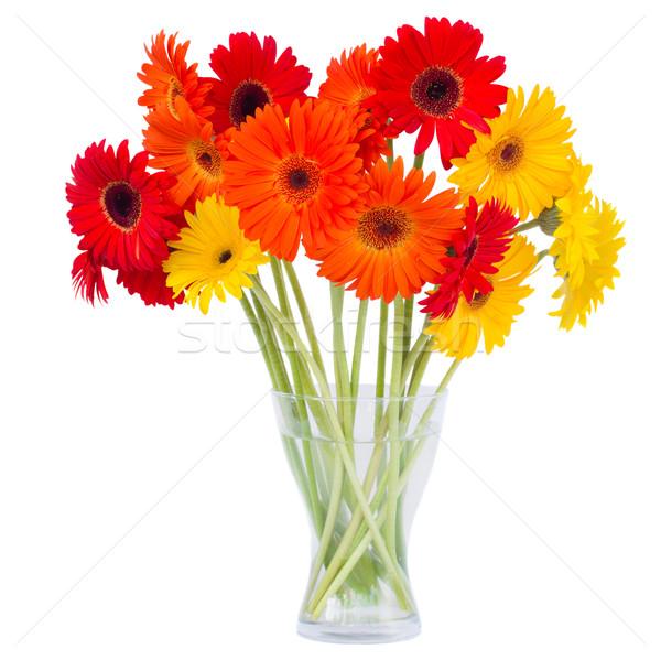 gerbera flowers in vase Stock photo © neirfy