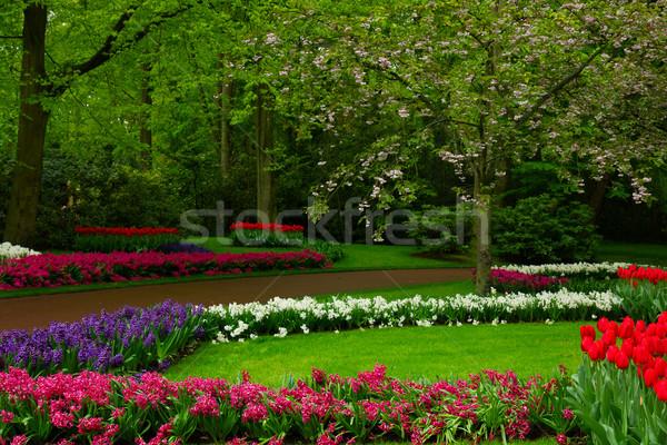 spring garden in Keukenhof, Holland Stock photo © neirfy