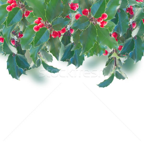 Holly branch border Stock photo © neirfy