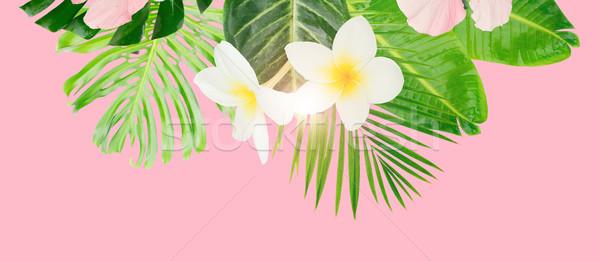 Tropikal yeşil yaprakları çiçekler kart afiş bo Stok fotoğraf © neirfy
