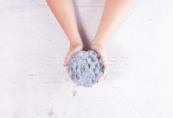 Succulent growing plants Stock photo © neirfy