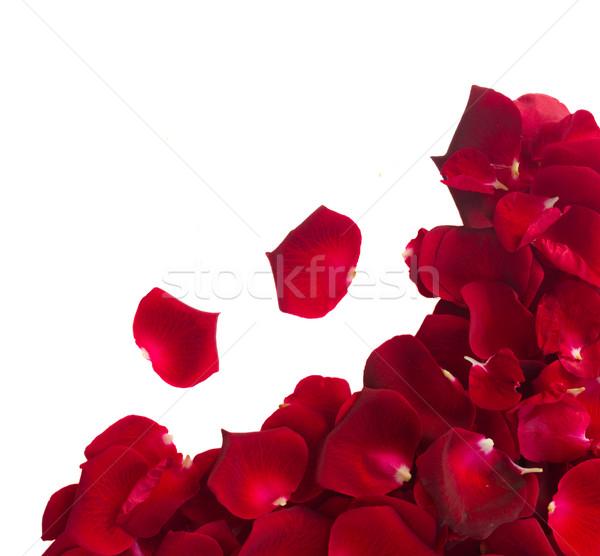 Grens rozenblaadjes Rood rose bloemblaadjes geïsoleerd Stockfoto © neirfy