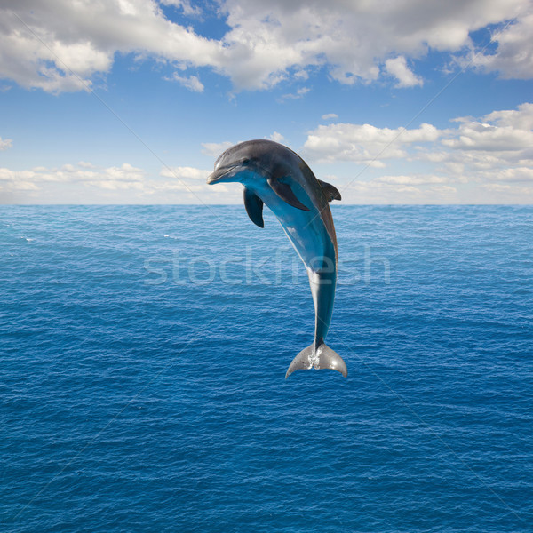 single  jumping dolphin Stock photo © neirfy