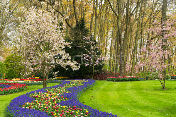 Foto stock: Formal · primavera · jardim · colorido · cereja