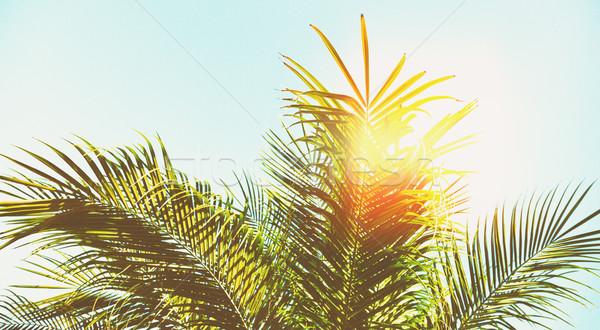 Palmera sol hojas cielo azul banner sol Foto stock © neirfy