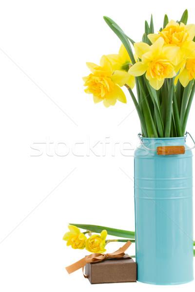 букет нарциссов синий ваза изолированный Сток-фото © neirfy
