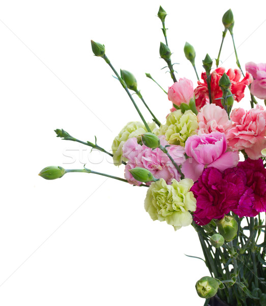 Nelke Blumen isoliert weiß Ostern Stock foto © neirfy