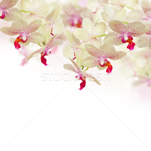 tender pink  orchid flowers with butterflies Stock photo © neirfy