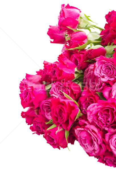 Taze leylak rengi güller yalıtılmış Stok fotoğraf © neirfy