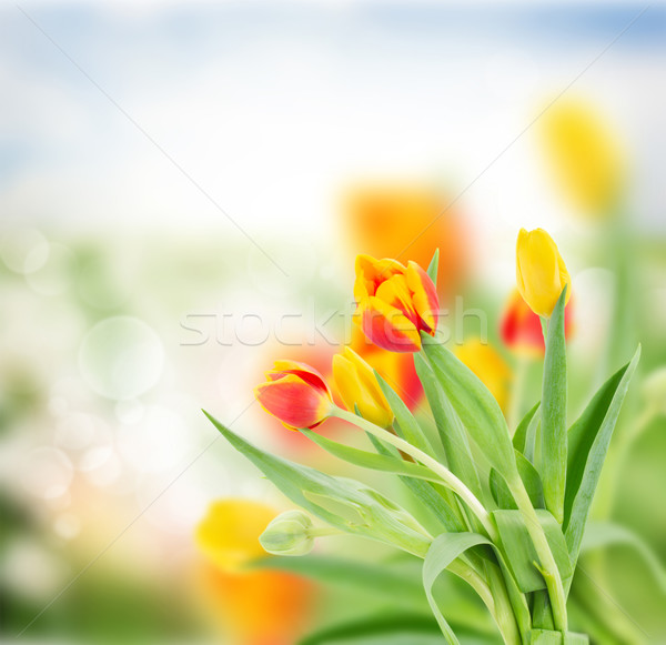Rouge jaune tulipes jardin bokeh herbe Photo stock © neirfy