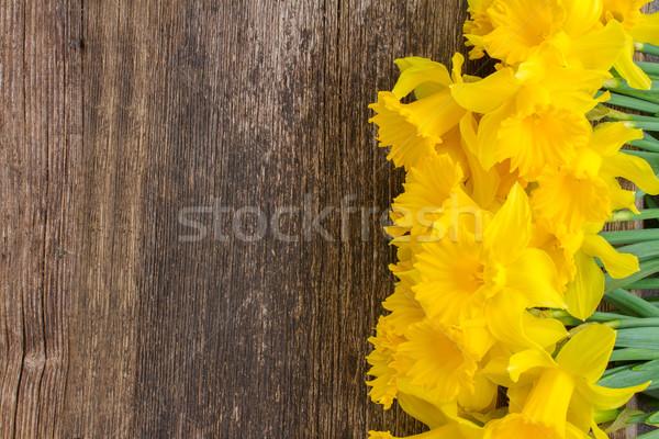 нарциссов свежие весны желтый Сток-фото © neirfy
