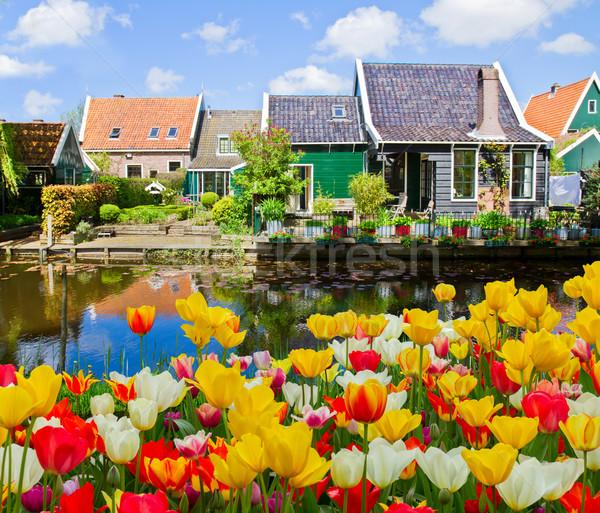 Città vecchia Paesi Bassi rurale scenario tulipani Foto d'archivio © neirfy