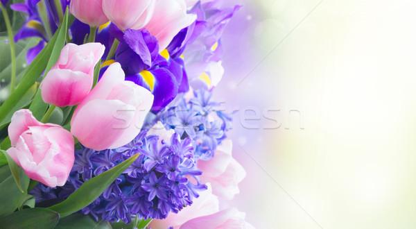 Tulpen roze Blauw bloemen sluiten exemplaar ruimte Stockfoto © neirfy