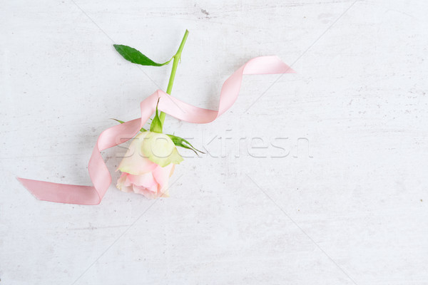Pink rose flowers Stock photo © neirfy