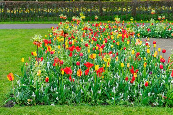 Narcisi corsia tulipani fiori confine verde Foto d'archivio © neirfy