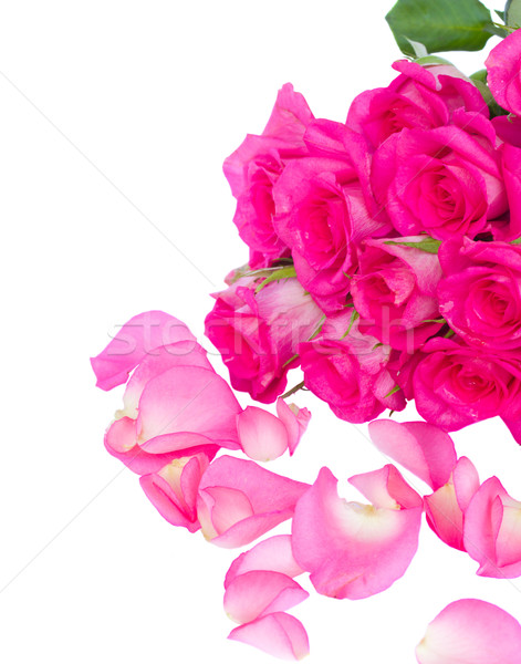 fresh pink  roses bouquet with petals Stock photo © neirfy