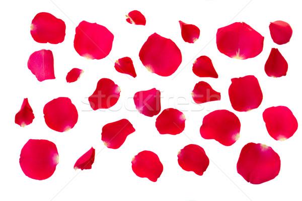 Stockfoto: Bloemblaadjes · geïsoleerd · witte · natuur · achtergrond