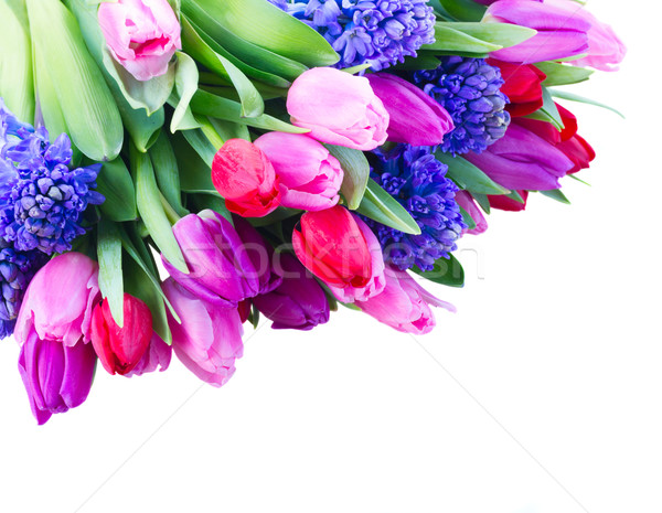 Stock photo: bouquet of   blue hyacinth and  tulips