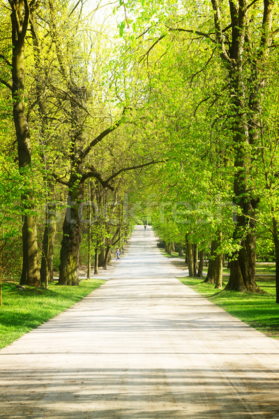 Sikátor park zöld fák Varsó Lengyelország Stock fotó © neirfy
