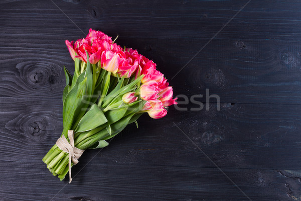 Pink tulips on black Stock photo © neirfy