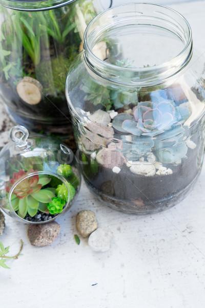 Kert bent kőműves bögre üveg növények Stock fotó © neirfy