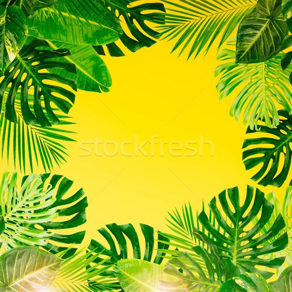 Tropicales feuilles vertes fraîches cadre jaune texture Photo stock © neirfy