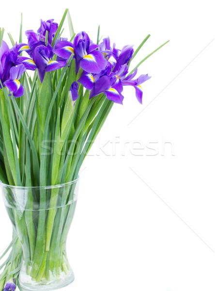 blue irise flowers posy in vase Stock photo © neirfy