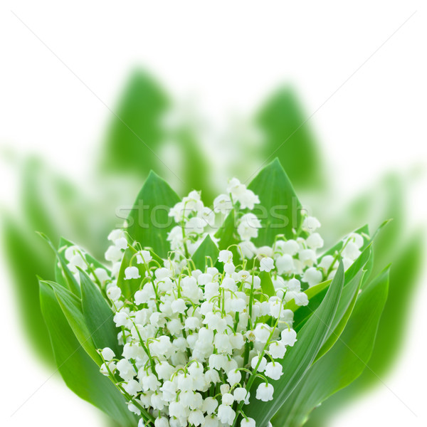 lilly of the valley posy close up Stock photo © neirfy