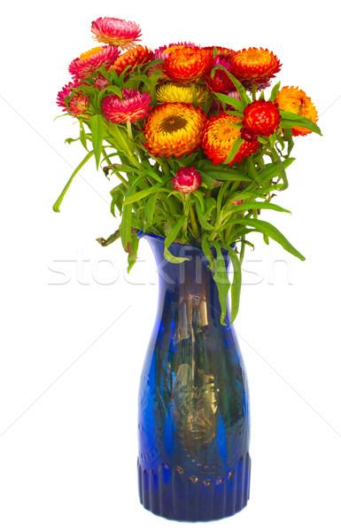 Stock photo: Bouquet of Everlasting flowers