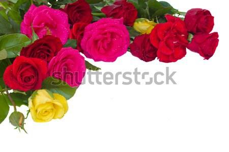 Köteg friss mályvaszínű rózsák közelkép kék Stock fotó © neirfy