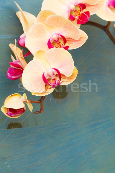 orange  orchid branch Stock photo © neirfy