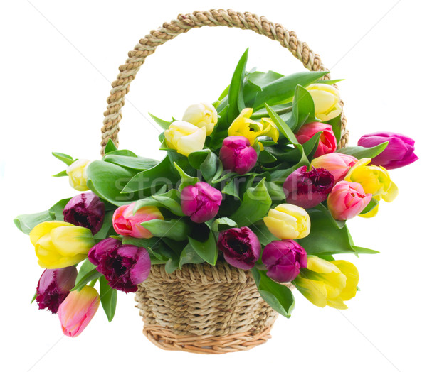 Stock photo: bouquet of  yellow and purple  tulip flowers
