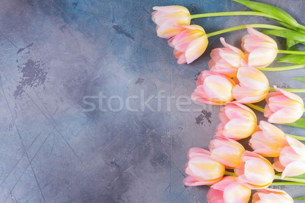 Pembe sarı lale gri taş Stok fotoğraf © neirfy