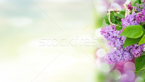 сирень цветы саду зеленые листья весны Сток-фото © neirfy