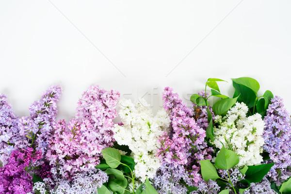 Taze çiçekler sınır beyaz bo Stok fotoğraf © neirfy
