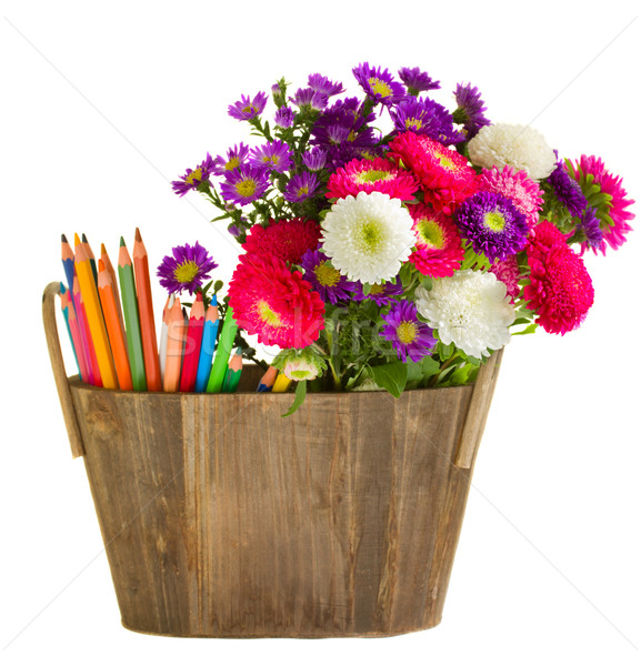 Pencils and aster flowers Stock photo © neirfy