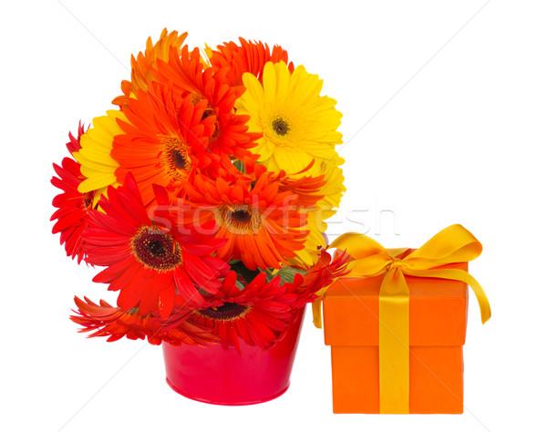 Сток-фото: цветы · банка · шкатулке · изолированный · белый · цветок